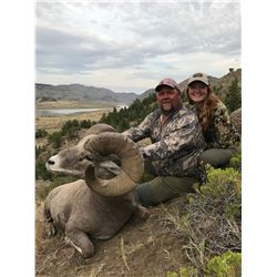 STATE OF MONTANA BIGHORN SHEEP LICENSE