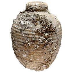 "Earthenware ""olive"" jar from an unidentified 1600s-1700s Yucatan wreck, encrusted as found."