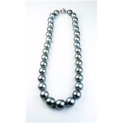 Exquisite Natural Tahitian South Sea Pearls  ranging between 11.00 MM to over 14.50 MM in  diameters