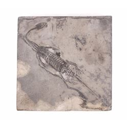 Complete Fossilized Lizard