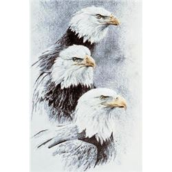 Bald Eagle Studies #1- Heads by Robert Bateman