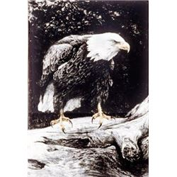 Bald Eagle Studies #3 - Ready by Robert Bateman