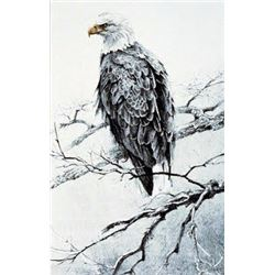 Bald Eagle Studies #4 - Perched by Robert Bateman