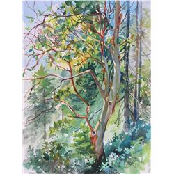 West Coast Arbutus by Zoe Evamy
