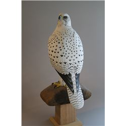 """Gyrfalcon"" by Andy White"