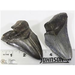 2 LARGE FOSSIL MEGALODON SHARK TEETH