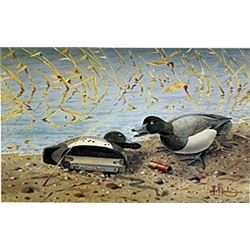 "Print ""Delta Marsh Friends"" Les C. Kouba"