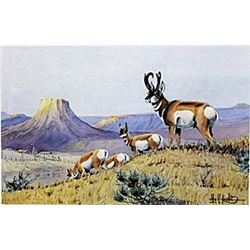 "Print ""Prong Horns Working the Ridge""  Les C. Kouba"