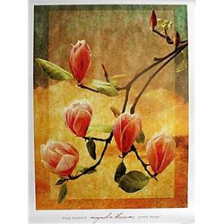 "Fine Art Print ""Mangolia Blossoms"" by Doug Landreth"