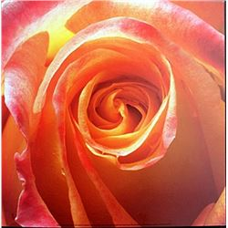 "Fine Art Print ""Orange Rose"" by Laurent Pinsard"