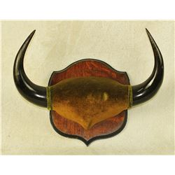 Buffalo Horn Plaque