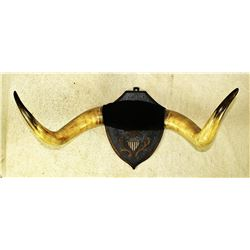 Longhorn Wall Plaque