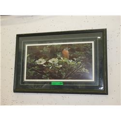 "Limited Edition T. Isaac Print ""Backyard Robin"""