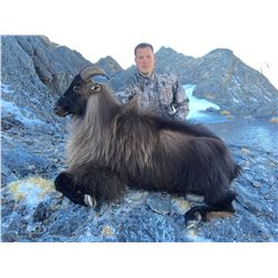 3 Day Alpine Tahr for One Hunter