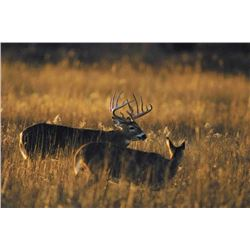 5 Day Trophy Whitetail Deer Hunt for One Hunter