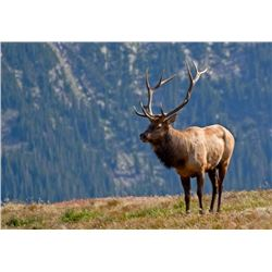 5 Day Rocky Mountain ELK Free Range Hunt for One Hunter