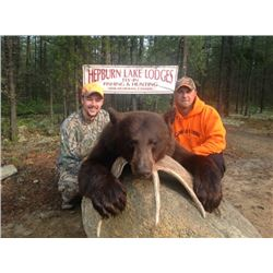6 Day Bear Hunt for One at our drive in camp - LaRonge, Saskatchewan, Canada