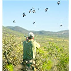 Argentina - Unlimited Dove Hunt for 3 Hunters – OC Outfitters