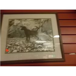 FRAMED PRINT - DOG