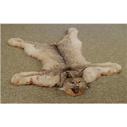 "Canadian Lynx rug, 50""l x 41""w, w/ rings for hanging"