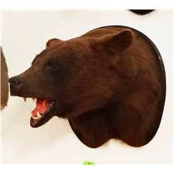 Black Bear head mount (brown)