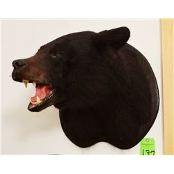 Black Bear head mount (black)