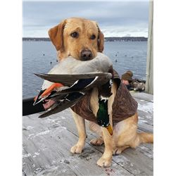 Waterfowl Hunt for 4 Hunters