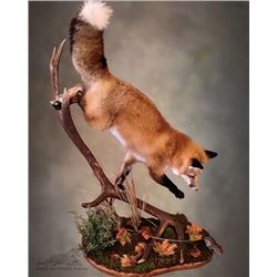 Nature's Best Wildlife Artistry, Taxidermy