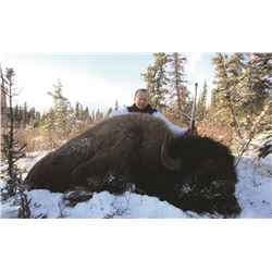 7 Day Bison Hunt in the Peace Region