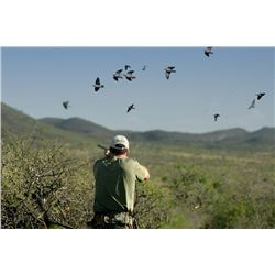 Four-Day Argentina Dove Hunt for Four Shooters