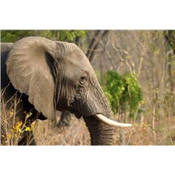 Five Day Management Bull Elephant Hunt in Zimbabwe