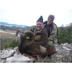 Croatia Mouflon Sheep Hunt