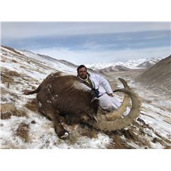 Seven Day Mid-Asian Ibex in Tajikistan