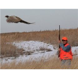 South Dakota - 2 Day - 2 Night Wild Pheasant Hunt for 2 Hunters for 2018 or 2019
