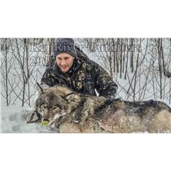 Ontario - 6 Day - 7  Night Trophy Wolf Hunt for 1 Hunter in Ontario, Canada.