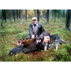 Russia - 5 Day - 7 Night Hunting Package for European Bull Moose for 1 Hunter in 2018