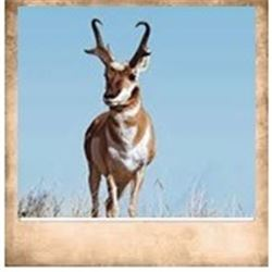 Pine Valley, Pronghorn