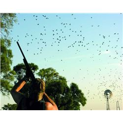 4-Day/3-Night Cordoba Argentina Dove Shooting Trip for 3 Hunters