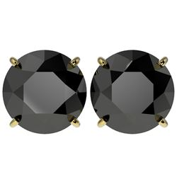 5 CTW Fancy Black VS Diamond Solitaire Stud Earrings 10K Yellow Gold - REF-117M8F - 33147