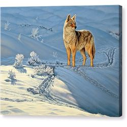 The Coyote Print on Canvas