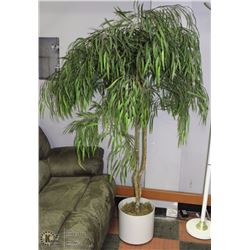 6' SILK TREE W/ POT