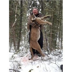 7 Day Cougar Hunt in British Columbia