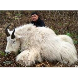 Mountain Goat Hunt for 1 in British Columbia