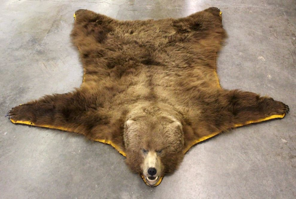 gbear inch bl p bear rug foot grizzly