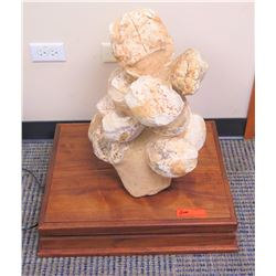Fossilized Dinosaur Eggs w/ Wooden Stand