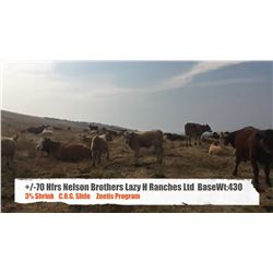 Nelson Brothers Lazy H Ranch - Longview, AB  +/- Heifers