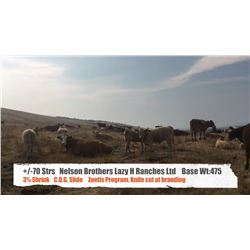 Nelson Brothers Lazy H Ranch - Longview, AB  +/- Steers