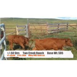Two Creek Ranch-High River, AB  +/- Steers