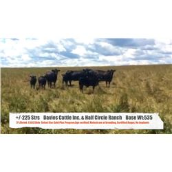 Davies Cattle Inc & Half Circle Ranch, Chelsey Davies-High River AB  +/- Steers