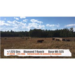 Diamond 7 Ranches-Cochrane, AB  +/- Steers